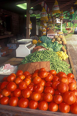 North Carolina: The Great Smoky Mtns Region, Swain County, Tuckaseegee Valley, Bryson City, Shuler's Produce Stand. A great stack of fresh tomatoes at one end of an outdoor table, followed by beans, squash, cabbage; peanuts hang in bags. [Ask for #216.015.]