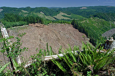 OR: South Coast Region, Coos County, Coast Range, Coquille River Mountains, Burnt Mountain Area, Burnt Mountain, View off a forestry road (Burnt Mountain Tie Road) towards an active clearcut on the opposite valley slope, showing foresters at work [Ask for #274.288.]