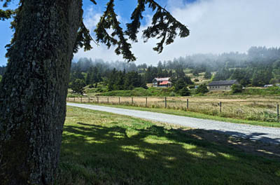 OR: South Coast Region, Curry County, North Coast, Cape Blanco Area, Cape Blanco State Park, Fog rolls into picnic area by the Sixes River; gravel road descends from cliffs above. Restored farmhouse museum in bkgd. [Ask for #274.382.]