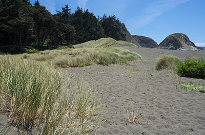 OR: South Coast Region, Curry County, North Coast, Port Orford Area, Town of Port Orford, Port Orford Heads State Park, A long expanse of dunes abut the south end of Port Orford Head [Ask for #274.406.]