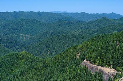 OR: South Coast Region, Douglas County, Coast Range, Elliott State Forest, The Ridgetop Drive, Cougar Pass Area, Wide views over clear cuts from FS 7000 (the northern mainline) at Cougar Pass [Ask for #274.509.]