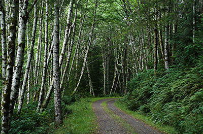 OR: South Coast Region, Douglas County, Coast Range, Elliott State Forest, Outside Links, FR 2000, This mainline logging road passes through a young hardwood forest on a steep slope. [Ask for #274.626.]