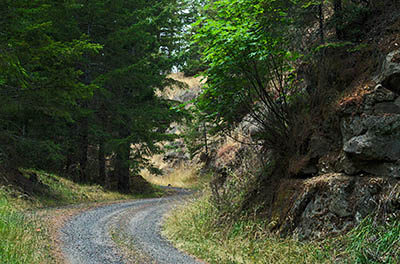 OR: South Coast Region, Douglas County, Coast Range, Elliott State Forest, Outside Links, FR 2000, This mainline logging road passes through rock cuts as it descends to SR 38 and the Umpqua River. [Ask for #274.627.]