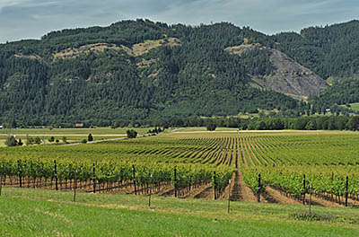 OR: South Coast Region, Douglas County, Umpqua Valley, Roseburg Area, Melrose, Coles Valley, Vineyards, framed by cliffs of the Umpqua River's gorge [Ask for #276.884.]