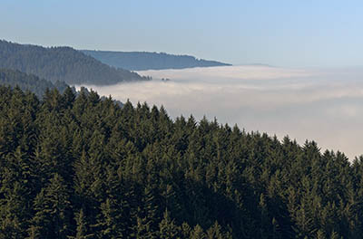OR: South Coast Region, Lane County, Pacific Coast, Cape Perpetua Area, Cape Perpetua National Scenic Area, Cape Perpetua Overlook, Fog sits over the cape, as the Coast Range rises above it [Ask for #276.997.]