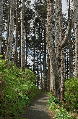 OR: South Coast Region, Lane County, Pacific Coast, Cape Perpetua Area, Cape Perpetua National Scenic Area, Devils Churn Day Use Area, Path decends through forests to reach cliffs. [Ask for #278.085.]